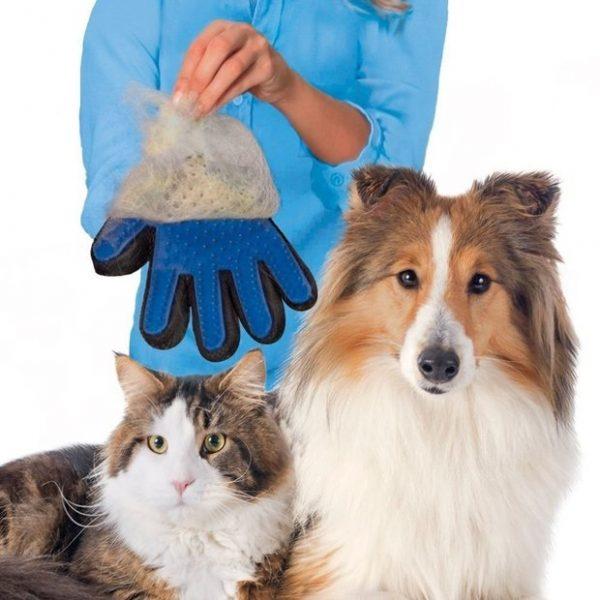 démonstration du gant magique anti-poils chat et chien