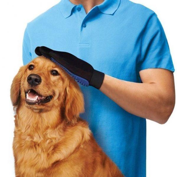 Mise en situation du gant magique anti-poils sur un chien