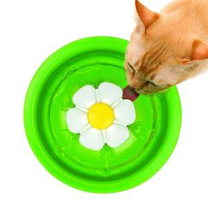 Fontaine à Fleur pour Chat